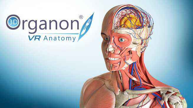 3D Organon VR Anatomy | Enterprise Edition