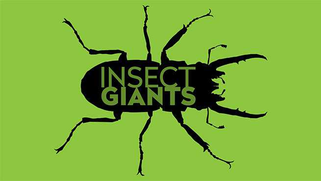 Insect Giants