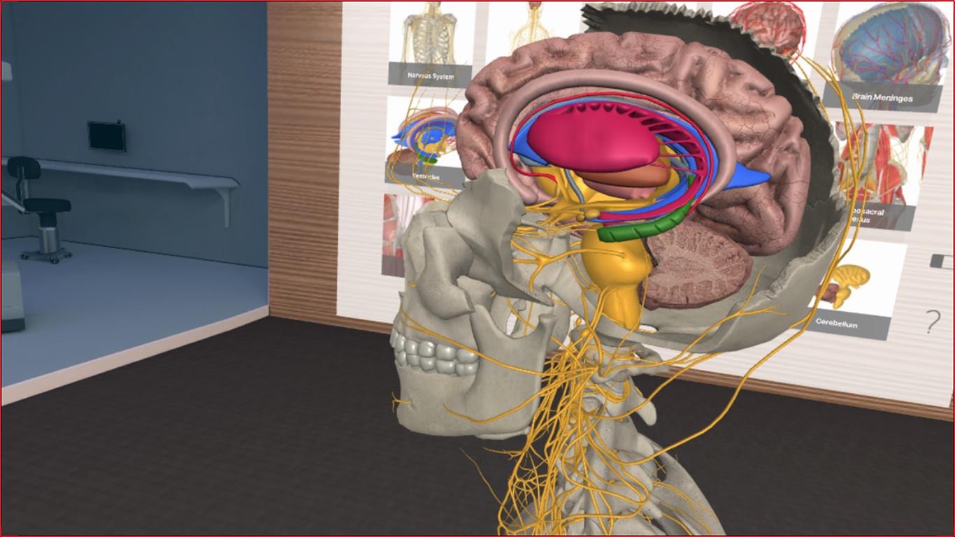 Segunda parte - 3D Organon VR Anatomy: ANÁLISIS